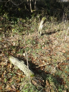 Victorian Ook fence post; one fell in winter 2014/5